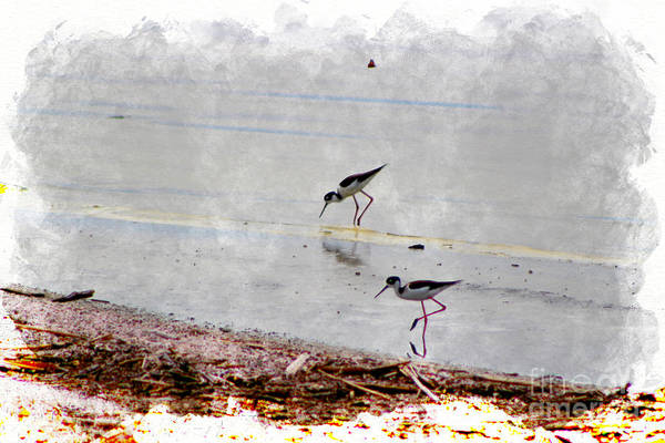 Photograph - Black Neck Stilts At Salton Sea In Digital Watercolor by Colleen Cornelius