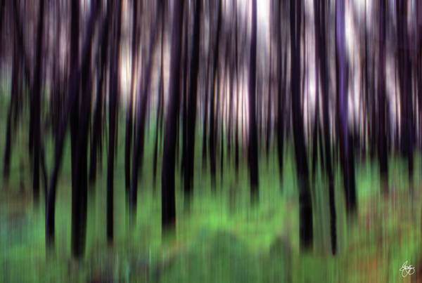 Photograph - Black Pines In A Green Wood by Wayne King