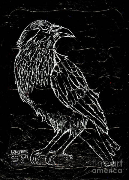 Tattoo Drawing Drawing - Black Raven by Genevieve Esson