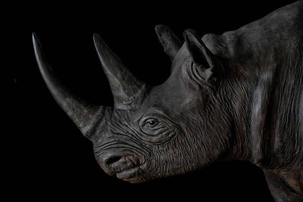 Critically Endangered Wall Art - Photograph - Black Rhino by Joachim G Pinkawa