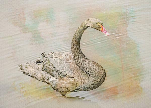 Digital Art - Black Swan Watercolor by Alison Frank