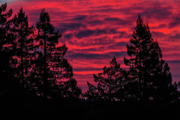 Wall Art - Photograph - Black Trees Against A Flaming Sky by Kathleen Bishop