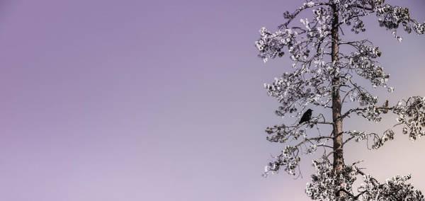 Wall Art - Photograph - Blackbird In Lavender by Karen Wiles