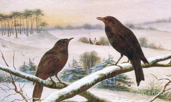 Painting - Blackbirds  by Harry Bright
