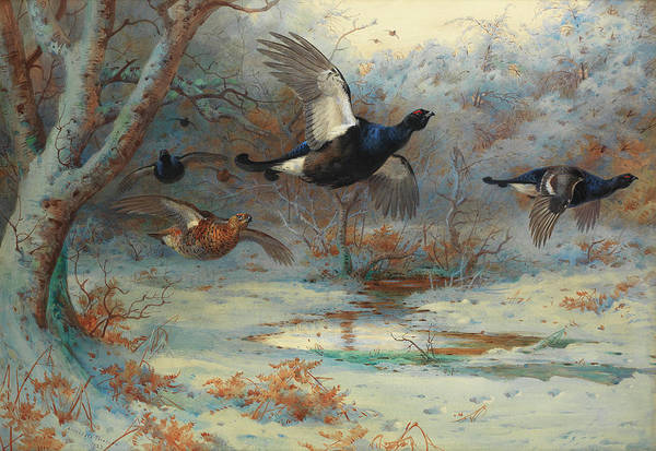 Wall Art - Painting - Blackgame In Woodland, Winter by Archibald Thorburn