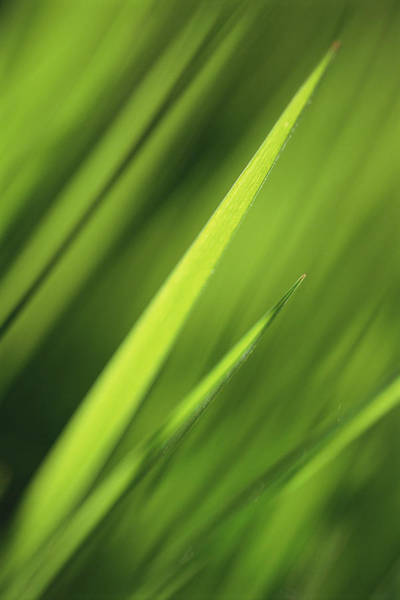 Full Frame Photograph - Blades Of Grass, Full Frame by Kathy Collins