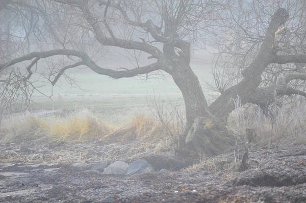 Photograph - Blanket Of Fog by Randi Grace Nilsberg
