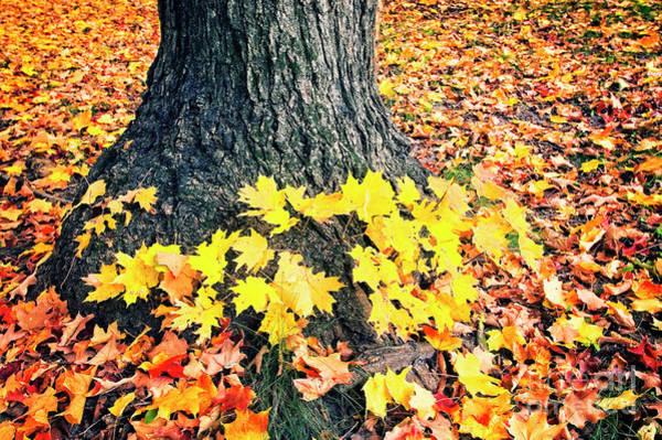 Photograph - Blanket Of Leaves by Scott Kemper