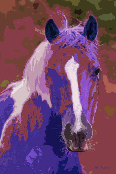 Wall Art - Painting - Blaze Profile - Painting by Ericamaxine Price