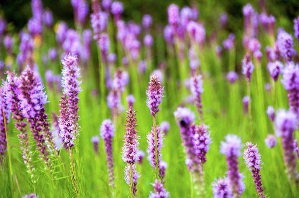 Photograph - Blazing Star by Steve Stuller
