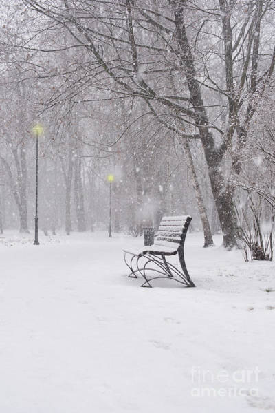 Photograph - Blizzard In The Park by Juli Scalzi