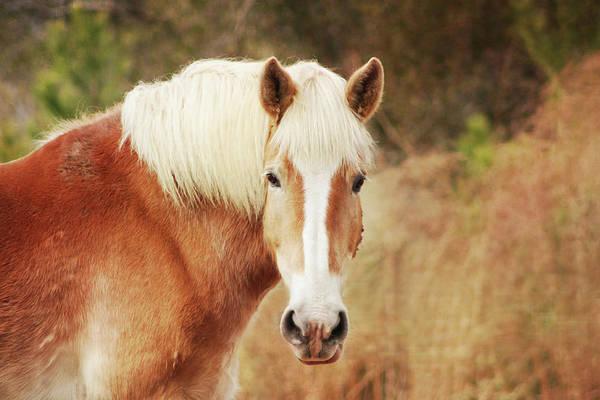 Wall Art - Photograph - Blond Horse by Daniela Duncan