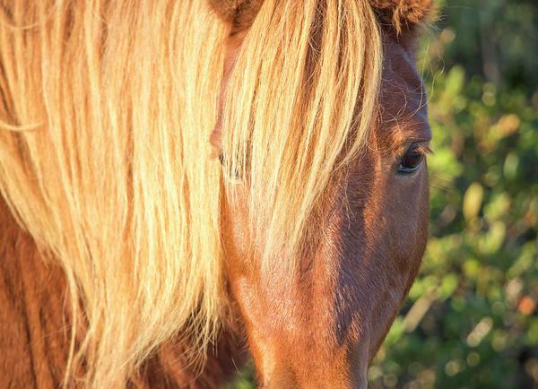 Wall Art - Photograph - Blonde Horse by Stephanie McDowell