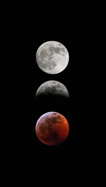 Photograph - Blood Moon Eclipse by Tailor Hartman