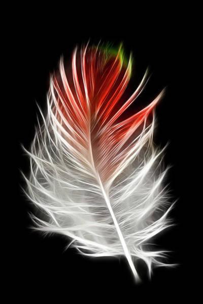 Pheasant Photograph - Blood Pheasant Feather Against Black by Darrell Gulin