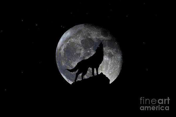Photograph - Pre Blood Red Wolf Supermoon Eclipse 873p by Ricardos Creations