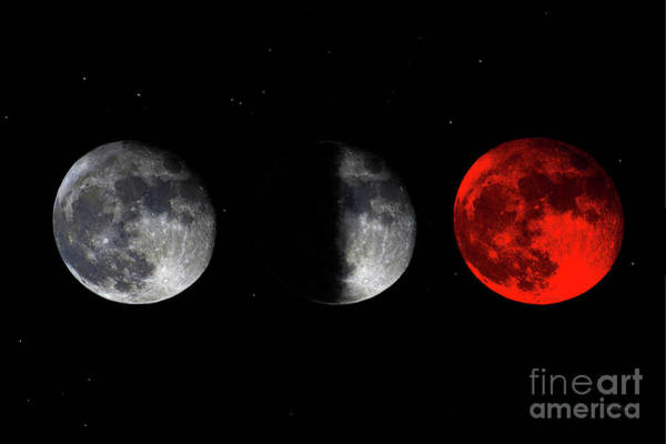 Photograph - Blood Red Wolf Supermoon Eclipse Series 873d by Ricardos Creations