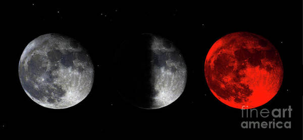 Photograph - Blood Red Wolf Supermoon Eclipse Series 873f by Ricardos Creations