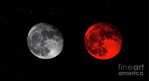 Photograph - Blood Red Wolf Supermoon Eclipse Series 873g by Ricardos Creations