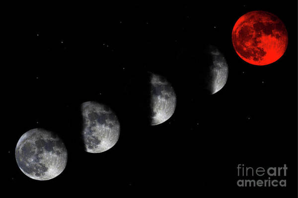 Photograph - Blood Red Wolf Supermoon Eclipse Series 873i by Ricardos Creations