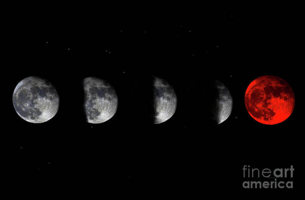 Photograph - Blood Red Wolf Supermoon Eclipse Series 873j by Ricardos Creations