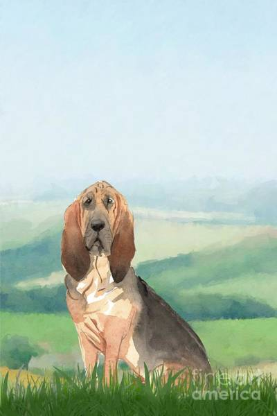 Pedigree Painting - Bloodhound by John Edwards