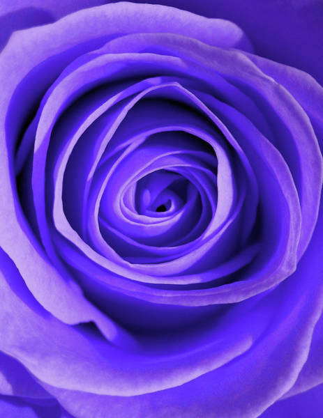 Wall Art - Photograph - Bloom In Blue by Gary Page