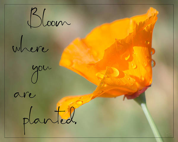 Photograph - Bloom Where You Are Planted By Tl Wilson Photography by Teresa Wilson