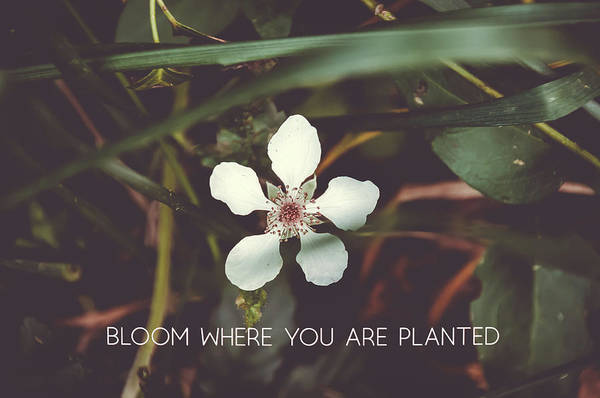 Photograph - Bloom Where You Are Planted #inspirational  by Andrea Anderegg
