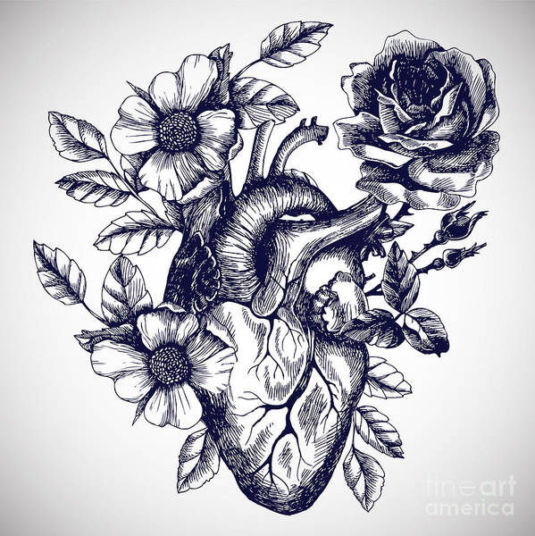 Wall Art - Digital Art - Blooming Anatomical Human Heart. Vector by Moopsi