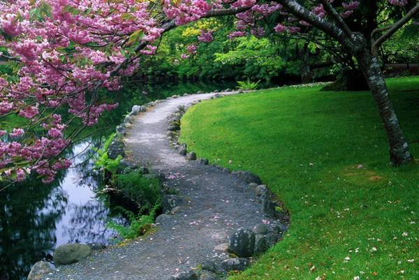 Campus Photograph - Blooming Cherry Tree In Japanese Garden by Design Pics/natural Selection Jeff Friesen