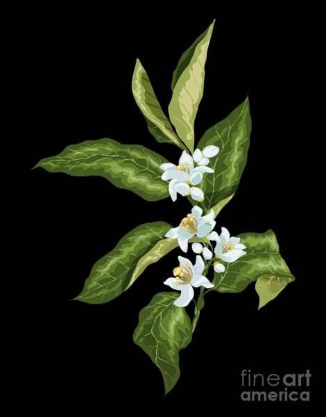Blooming Tree Drawing - Blooming Citrus Branch by Yulia Fushtey