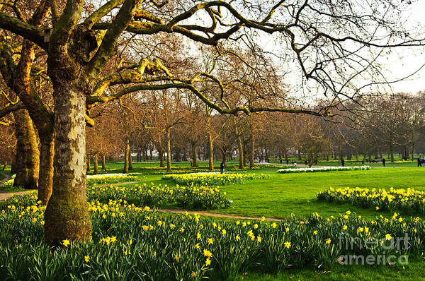 Wall Art - Photograph - Blooming Daffodils In St Jamess Park In by Elena Elisseeva