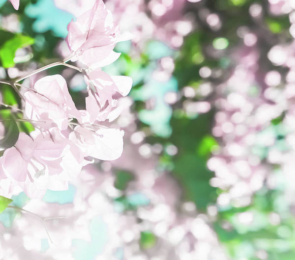 Photograph - Blooming Day IIi by Anne Leven