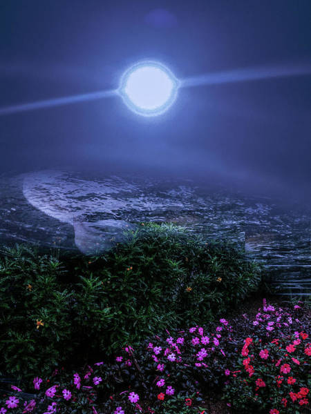 Photograph - Blooming In Moonlight by AE collections
