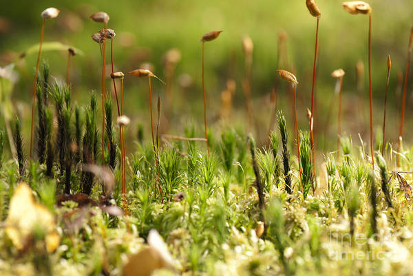 Ecosystem Wall Art - Photograph - Blooming Moss In The Forest Macro by Alla Shcherbak