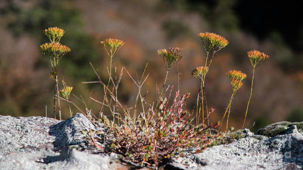 Wall Art - Photograph - Blooming On The Edge by Anita Faye