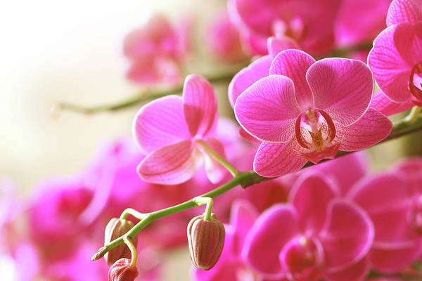 Wall Art - Photograph - Blooming Pink Orchid On A Green Branch by Dreaming2004