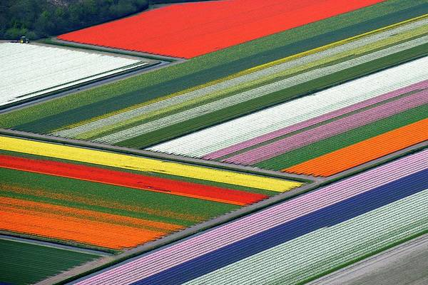 Wall Art - Photograph - Blooming Tulips Field by Hollandluchtfoto