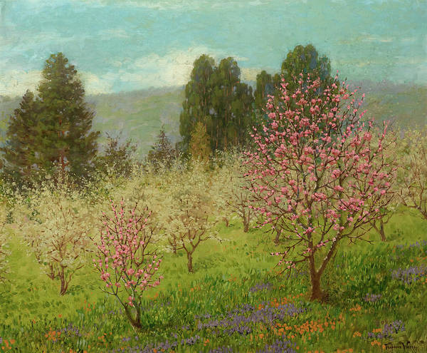 Silicon Valley Wall Art - Painting - Blossom Time In Saratoga, California, 1909 by Theodore Wores
