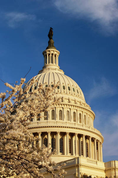Rotunda Photograph - Blossoming Cherry Trees Below Us by Danita Delimont