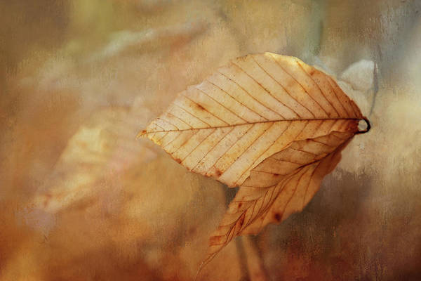 Wall Art - Digital Art - Blown Leaves by Terry Davis
