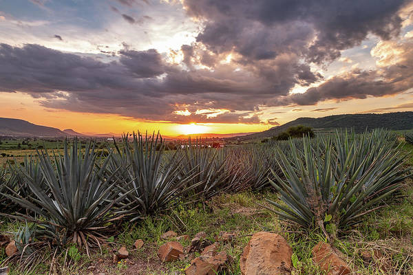 Atotonilco Photograph - Blue Agave Fields, Jalisco by Javier Flores