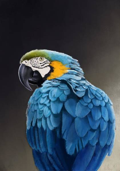 Parrot Digital Art - Blue And Gold Macaw by KC Gillies