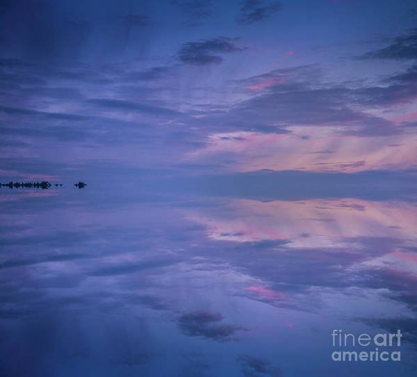 Photograph - Blue And Pink by Alana Ranney
