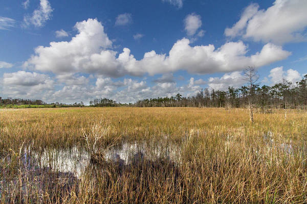 Photograph - Blue And White Over The Marsh by Debra and Dave Vanderlaan