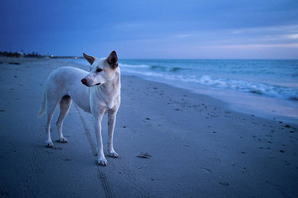 Tunisia Wall Art - Photograph - Blue Beach Dog by Picture By Markus Vollmer