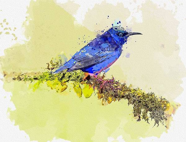 Flycatcher Painting - Blue Bird Costa Rica -  Watercolor By Ahmet Asar by Celestial Images