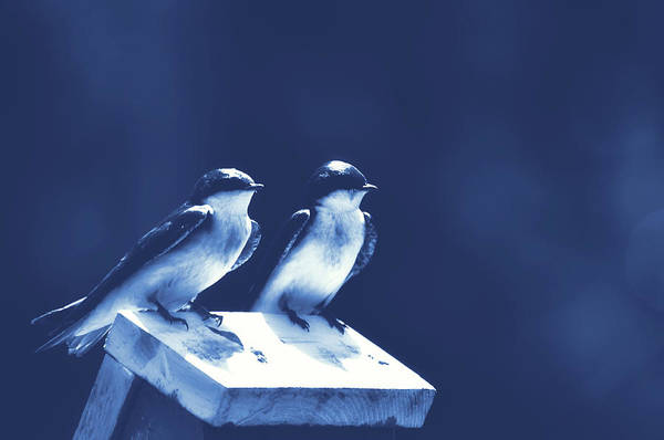 Photograph - Blue Birds by JAMART Photography