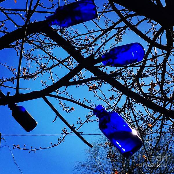 Photograph - Blue Bottles In Tree by Suzanne Lorenz